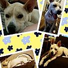 Adopt A Pet :: Radar