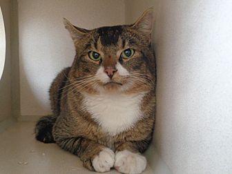 Adopt A Pet :: 18-0607  - Laramie, WY