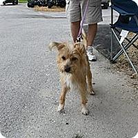 Adopt A Pet :: Chabawka - Brooksville, FL
