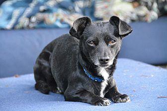 Adopt A Pet :: Vance  - Renton, WA