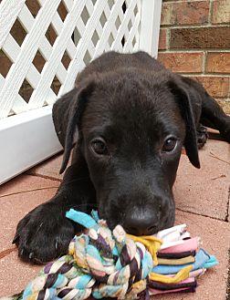 Adopt A Pet :: Ragnar  - Snow Hill, NC