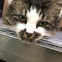 Adopt A Pet | Petsmart Charities