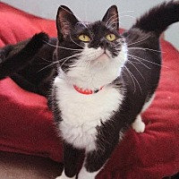 Adopt A Pet :: Zia - Fremont, OH