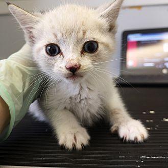 Adopt A Pet :: Walter  - Moose Jaw, SK