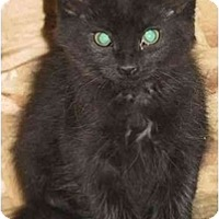 Adopt A Pet :: Whiskers - Strathmore, AB