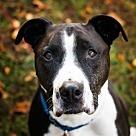 Adopt A Pet :: Sage