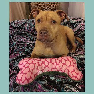 Adopt A Pet :: Bella  - Anchorage, AK