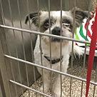 Adopt A Pet :: Riggs