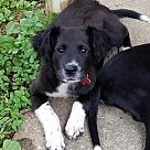 Adopt A Pet :: OH! Pup Oshie