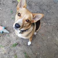 Adopt A Pet :: Miss Julie - Livingston, TX