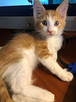 Adopt A Pet   PetSmart Charities