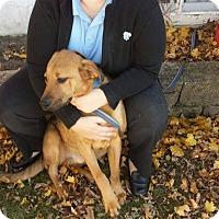 Adopt A Pet :: Willie - La Crosse, WI