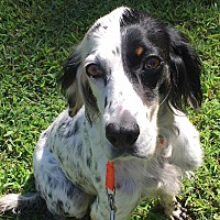 Adopt A Pet :: Trinity - CUMMING, GA