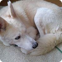 Adopt A Pet :: Laszlo - Madison, WI