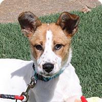 Adopt A Pet :: Zoey-PENDING! - Marion, AR
