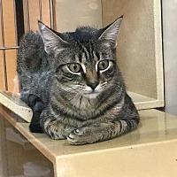 Adopt A Pet :: TIGGER - Modesto, CA