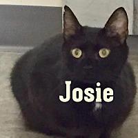Adopt A Pet :: Josie - Wheaton, IL
