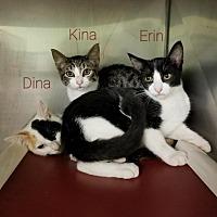 Adopt A Pet :: Erin - Gautier, MS