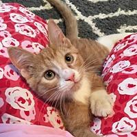 Adopt A Pet :: Ernie - Butner, NC