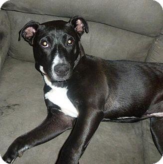 Winston Salem Nc Border Collie Meet Lexie A Pet For