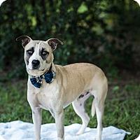 Adopt A Pet :: Samson - Fort Valley, GA