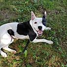 Adopt A Pet :: Jewel~adopted!