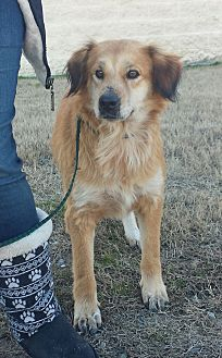 Adopt A Pet :: Theo  - Snow Hill, NC