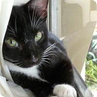 Adopt A Pet :: Morgan - Sunny Isles Beach, FL