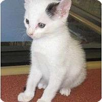 Adopt A Pet :: Buddy - Riverside, CA
