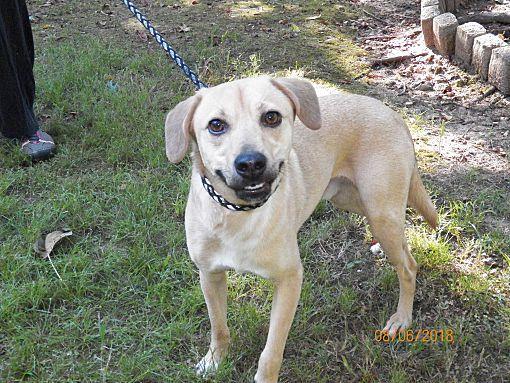 Boston, MA - Feist  Meet Sammy a Pet for Adoption
