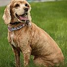 Adopt A Pet :: Jewel