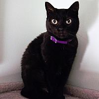 Adopt A Pet :: Rena - Morganton, NC