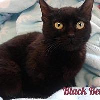 Adopt A Pet :: Black Betty - Harrisville, WV
