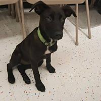 Adopt A Pet :: Anita - Tampa, FL