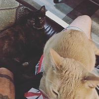 Adopt A Pet :: Gigi (COURTESY POST) - Baltimore, MD