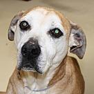 Adopt A Pet :: 26258 - Buttermilk