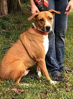 Adopt A Pet :: Barney  - Clarksville, TN