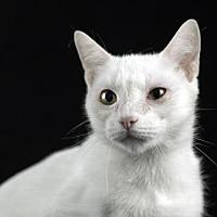 Adopt A Pet :: Catrina - Gainesville, FL
