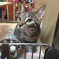 Adopt A Pet :: Paris - Morganton, NC