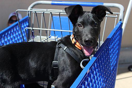Craigslist Wichita Falls Tx Pets - PetsWall