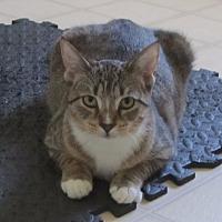Adopt A Pet :: Jessie Jess - Burgaw, NC