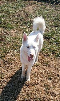 Adopt A Pet :: Ren  - Mt Vernon, IN