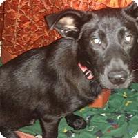 Adopt A Pet :: April - Tampa, FL
