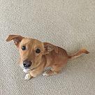 Adopt A Pet :: Cobb