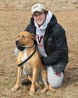 Rhodesian Ridgeback/American Pit Bull Terrier Mix Dog for adoption in Midlothian, Virginia - Nicholas aka Honey Bear