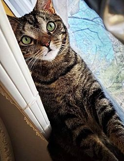 Adopt A Pet :: Cash  - Devon, PA