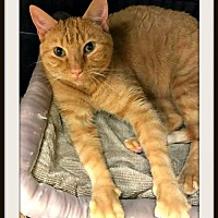Street Cats Rescue Overland Park
