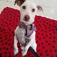 Adopt A Pet :: James - Harrisburg, PA