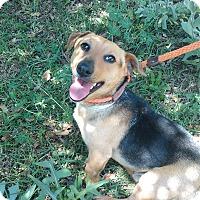 Adopt A Pet :: Russ - Lebanon, CT