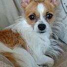 Adopt A Pet :: Leo